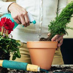 Nie tylko podlewanie, czyli jak pielęgnować rośliny doniczkowe
