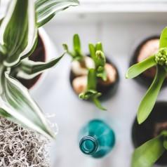 Motyw roślinny w aranżacjach wnętrz